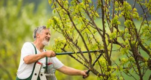 Remek áron igényelhet szakszerű kertgondozást.